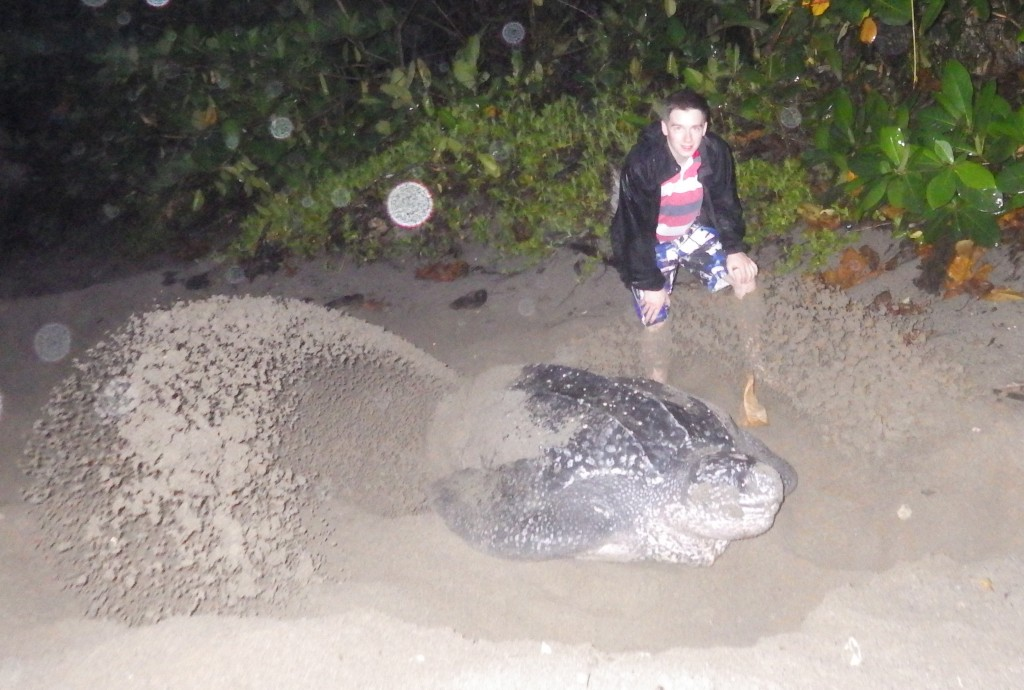 Action shot with a Leatherback turtle in Trinidad - Jack Bennet