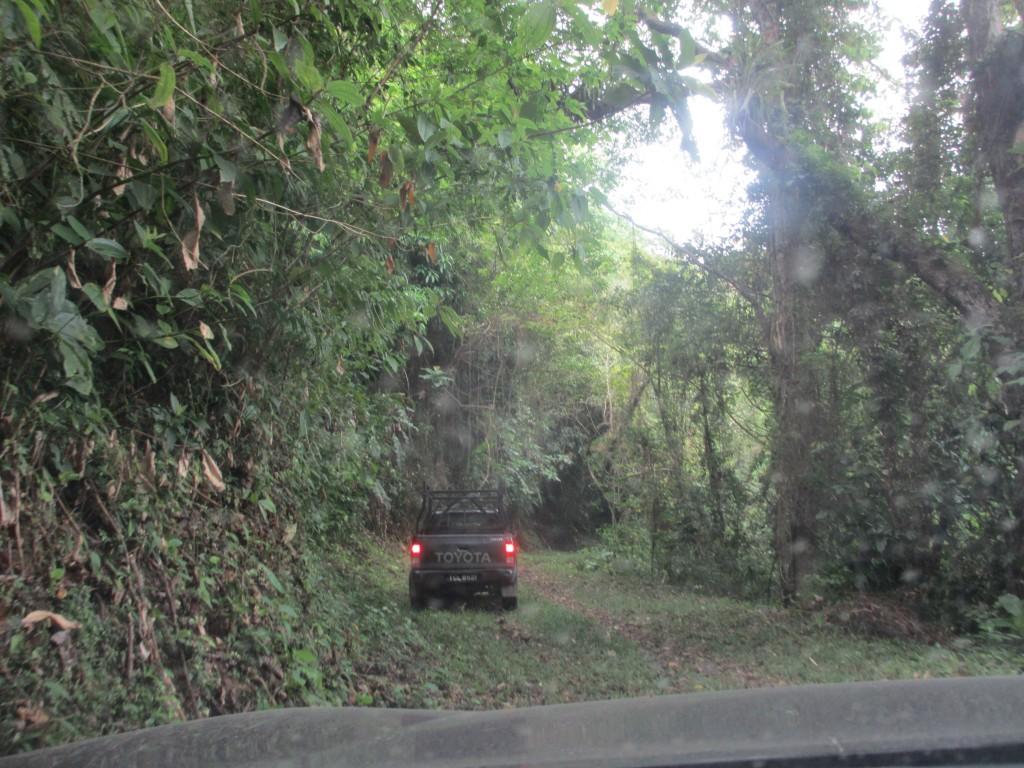 Deep in Trinidad Rainforest
