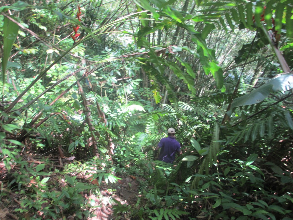 Trekking through deep vegetation in Trinidad